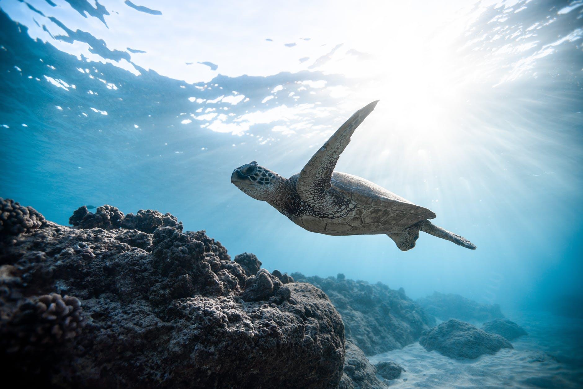 photo of sea turtle