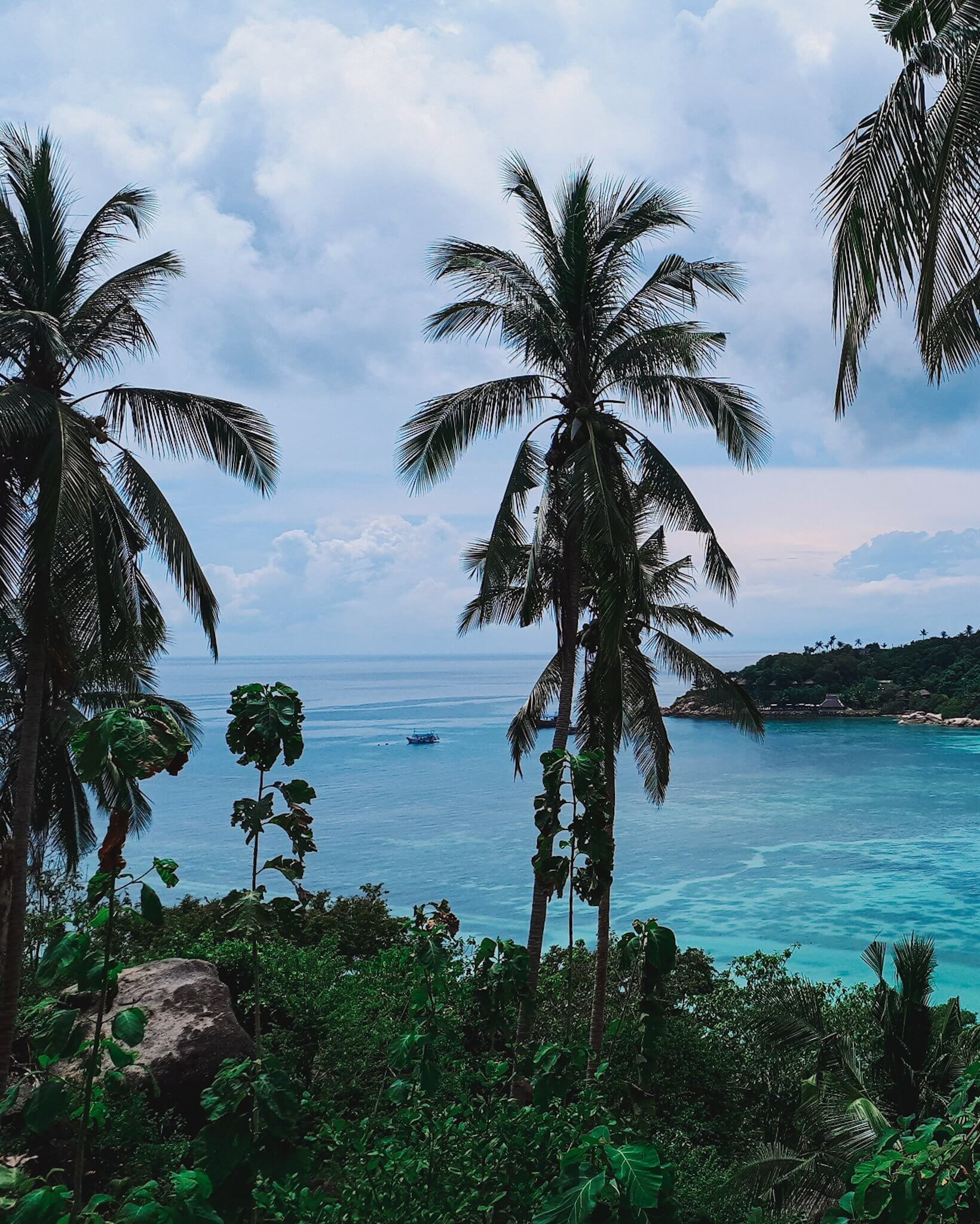 Koh Tao with all it's palm trees