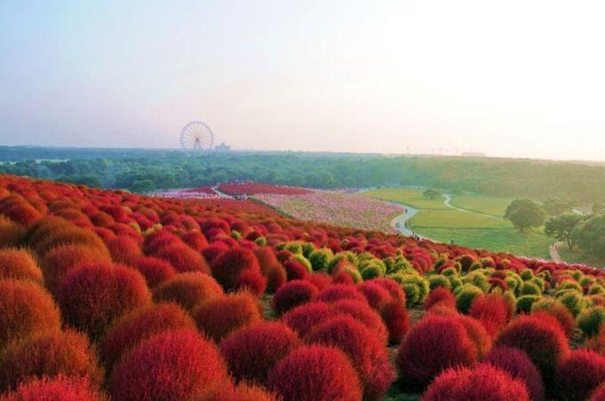 Park nadmorski Hitachi