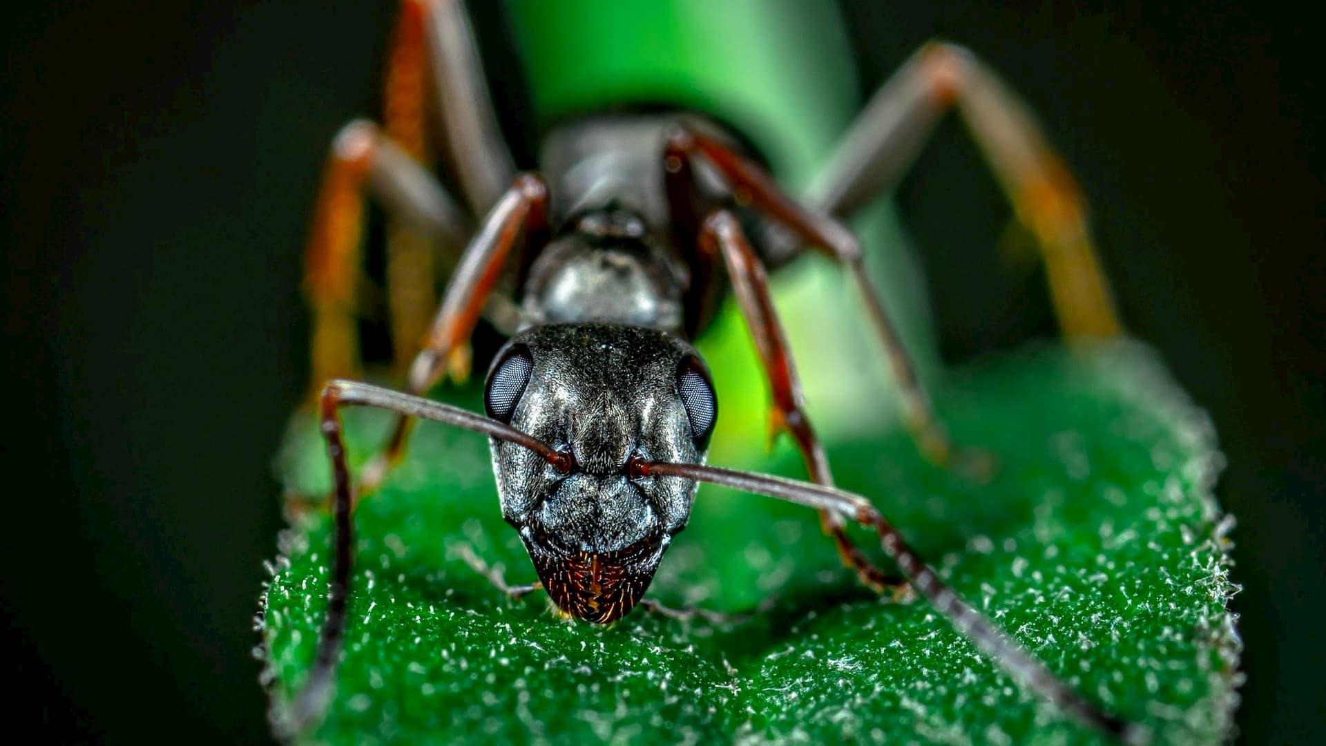 Vrede is voor mieren