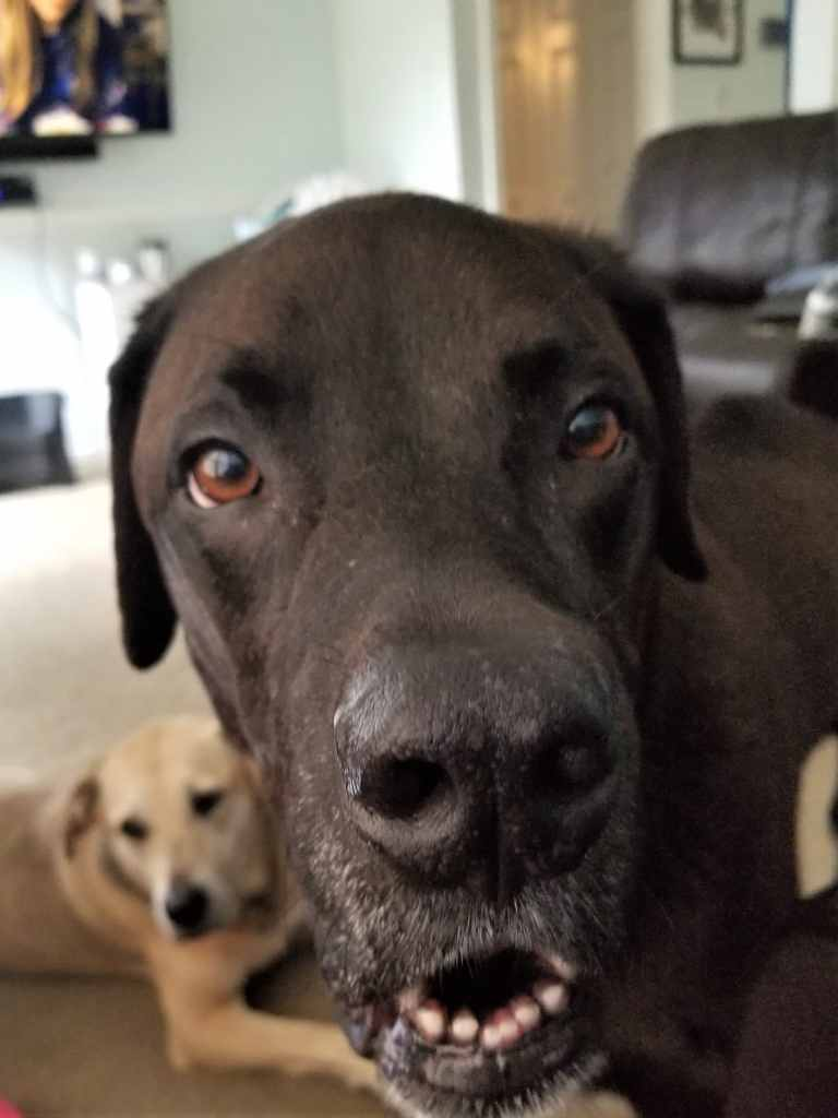 Sampson with a photo bomb from Gracie
