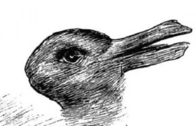 you see a rabbit or a duck