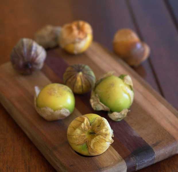 tomatillos with husks for Salsa Verde—Green Table Sauce