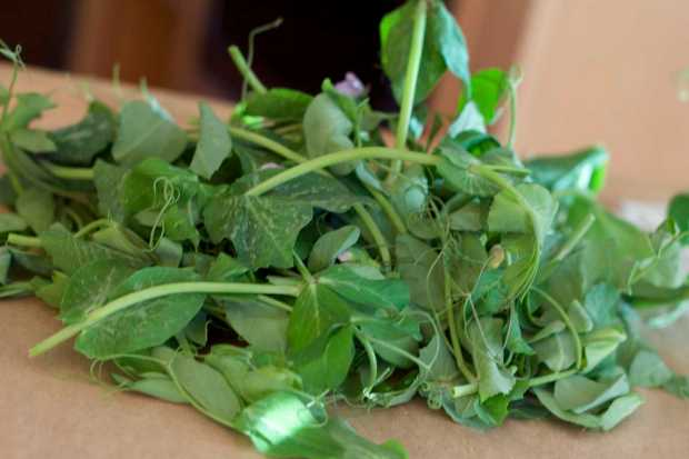 Salad of Wild Rice, Pea Shoots and Jicama