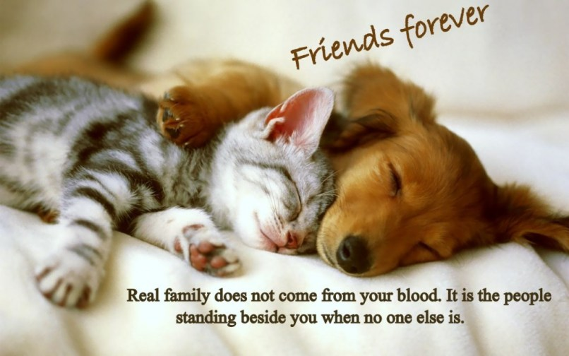 Cute Pictures Of Friends Forever Wallpapersimagesorg