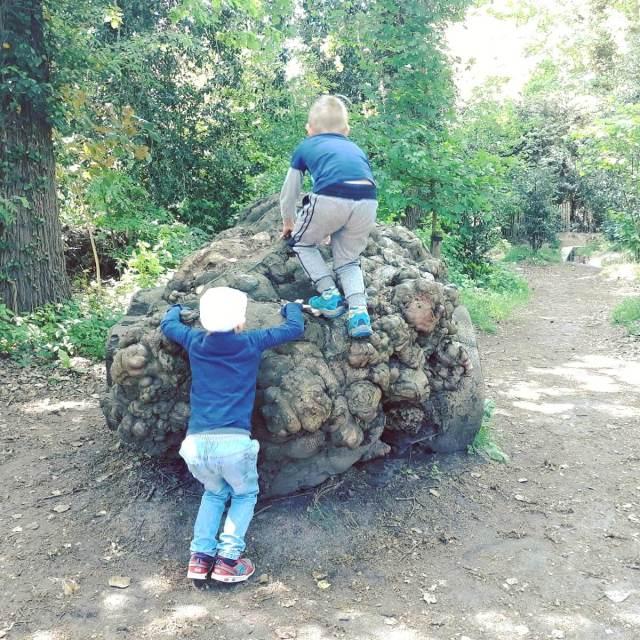 Uitje met kids: de Oerrrr speelnatuur van Natuurmonumenten met terras