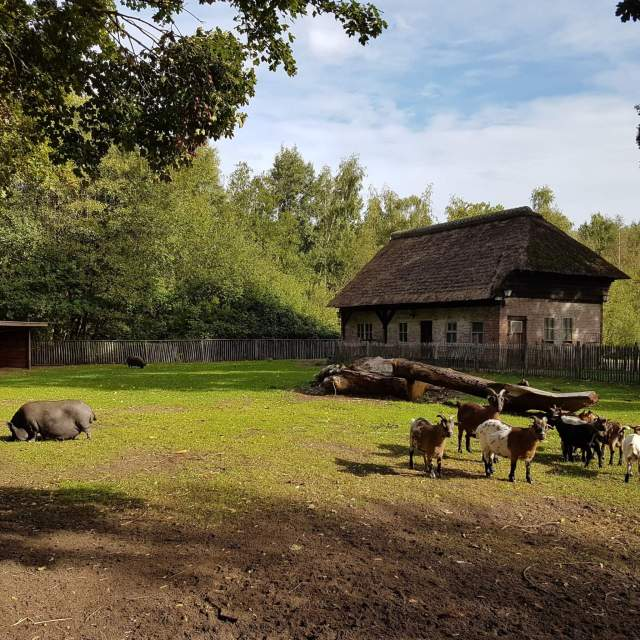 Geiten en hangbuikzwijn in Vakantiepark Dierenbos