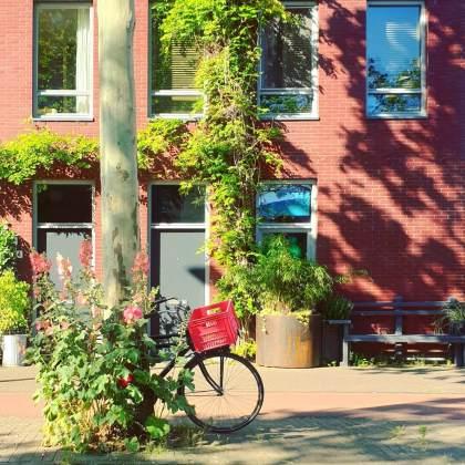 stokrozen in Amsterdam