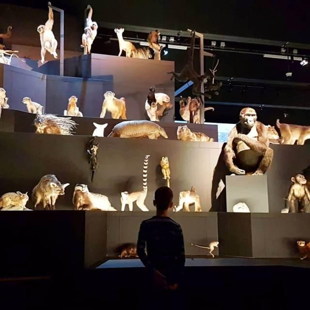 Museum Naturalis: een van de grootste natuurhistorische collecties ter wereld