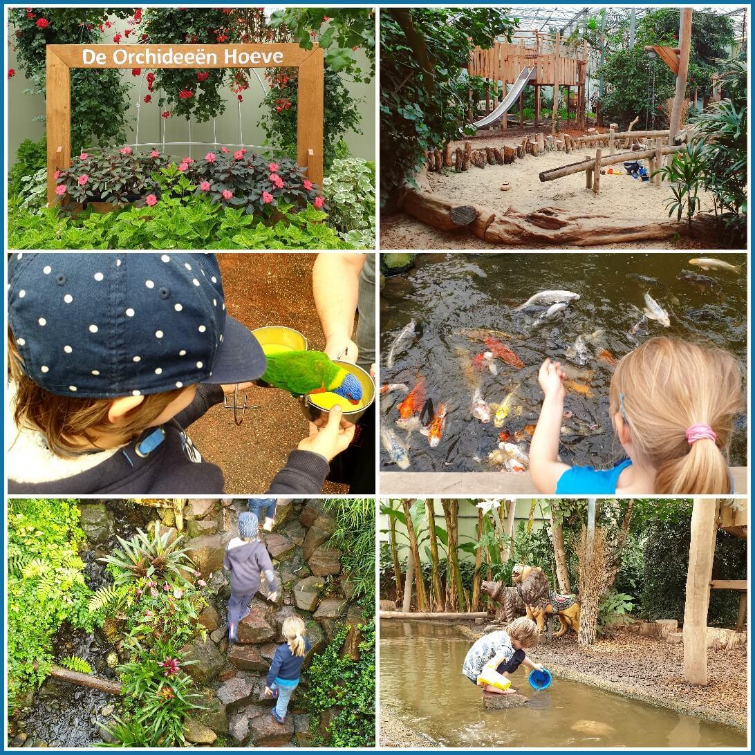 Binnen uitje met kinderen in Flevoland de Orchideeënhoeve