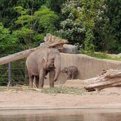 De Leuke Update #32 | nieuwtjes, ideeën, musthaves en uitjes voor kids - dierentuin Artis