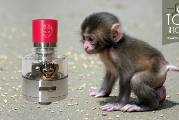 Monkey King RDA door Oumier