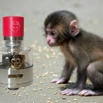 Monkey King RDA par Oumier