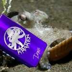 Kraken by Chalet MFG