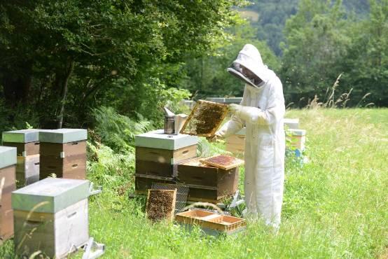 pourquoi les abeilles attaquent et que