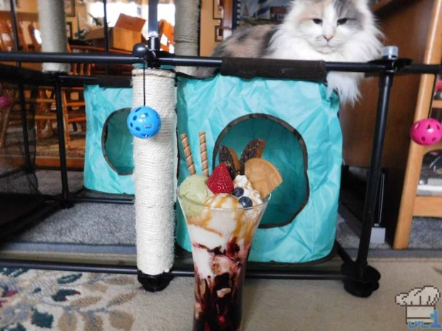 Long haired Persian cat looking at the Neko Atsume parfait with suspicion.