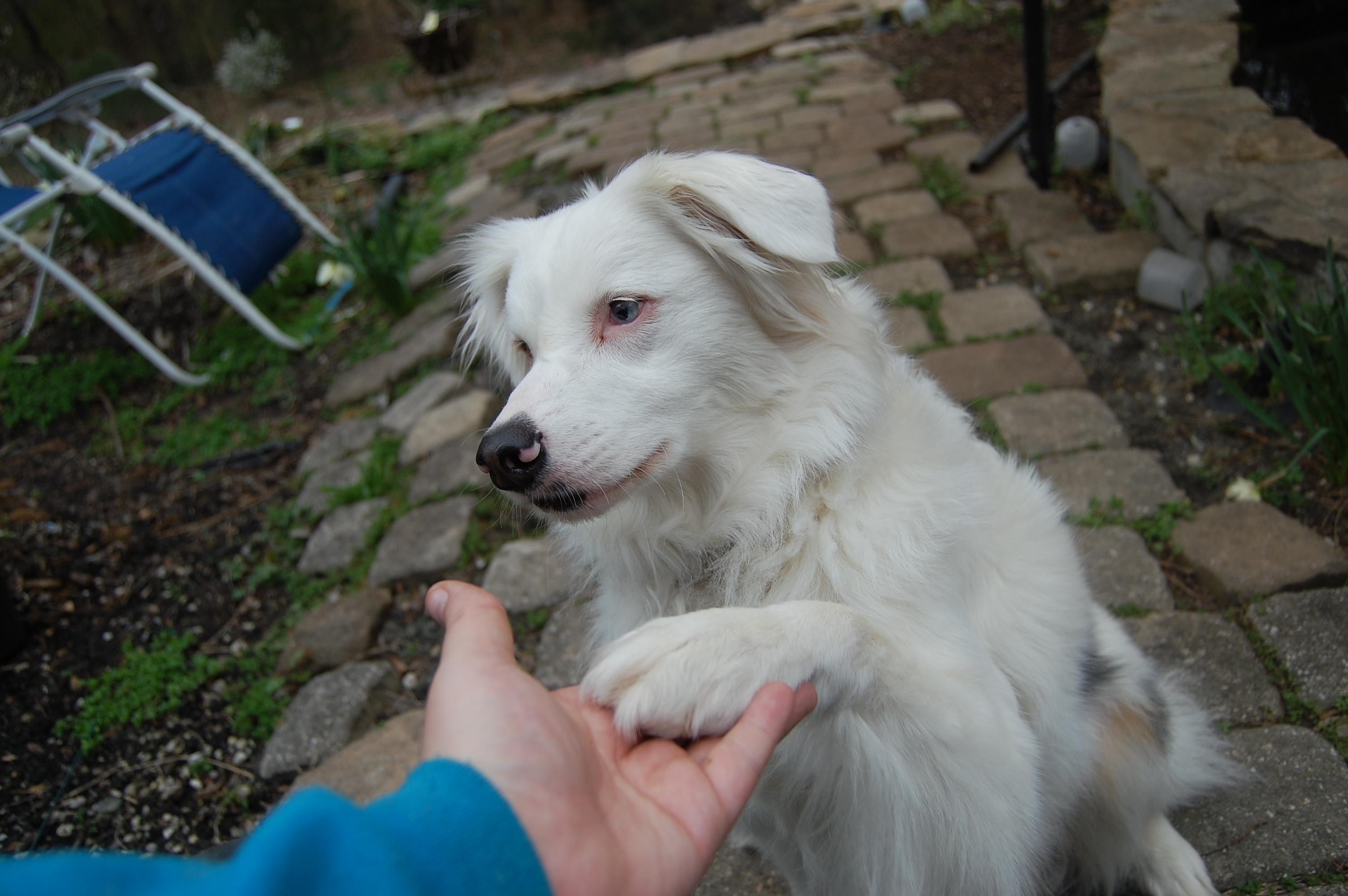 Basic Obedience Program at Level Up Dog Training