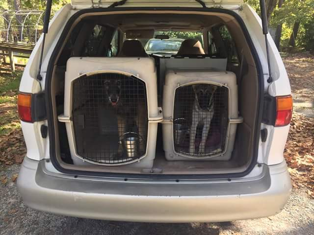 Panache (left) and Bright (right) in their crates before the first trip to Tennessee