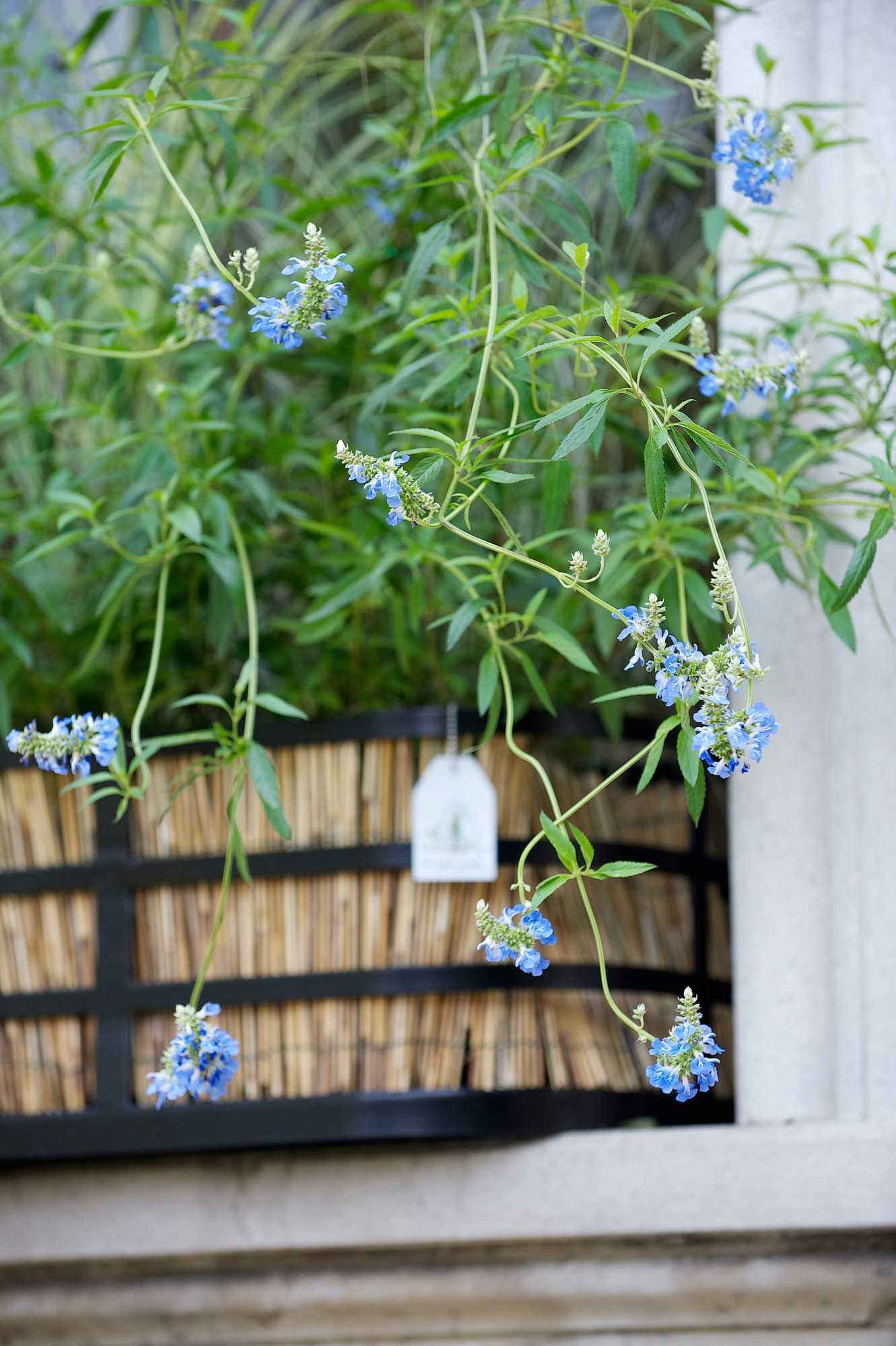 horticolario_023