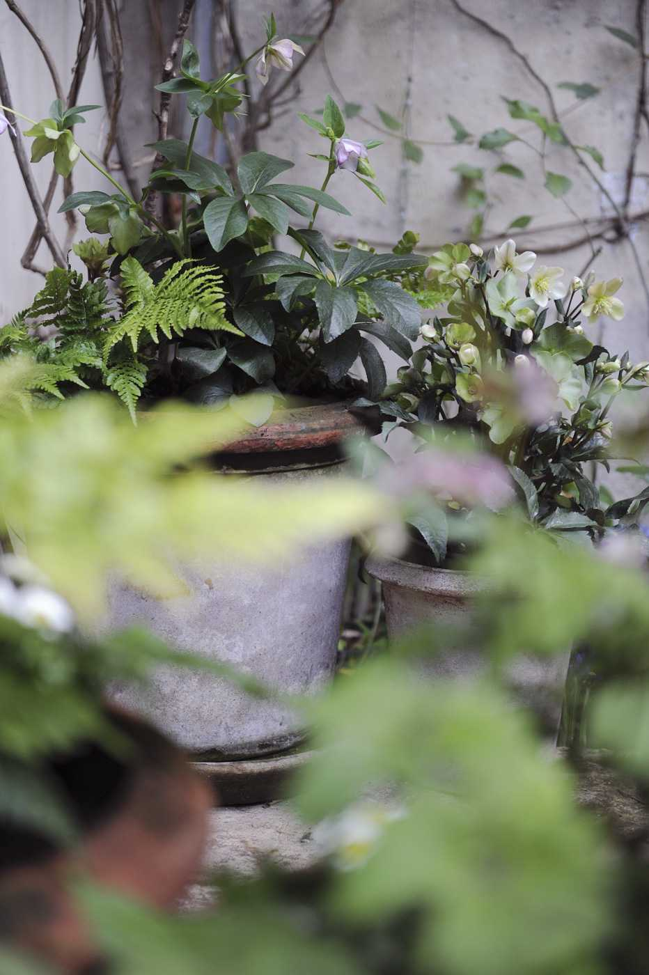 Potées de saisons. Décoration végétale Le Vert à Soi