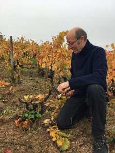 Vigne du Beaujolais