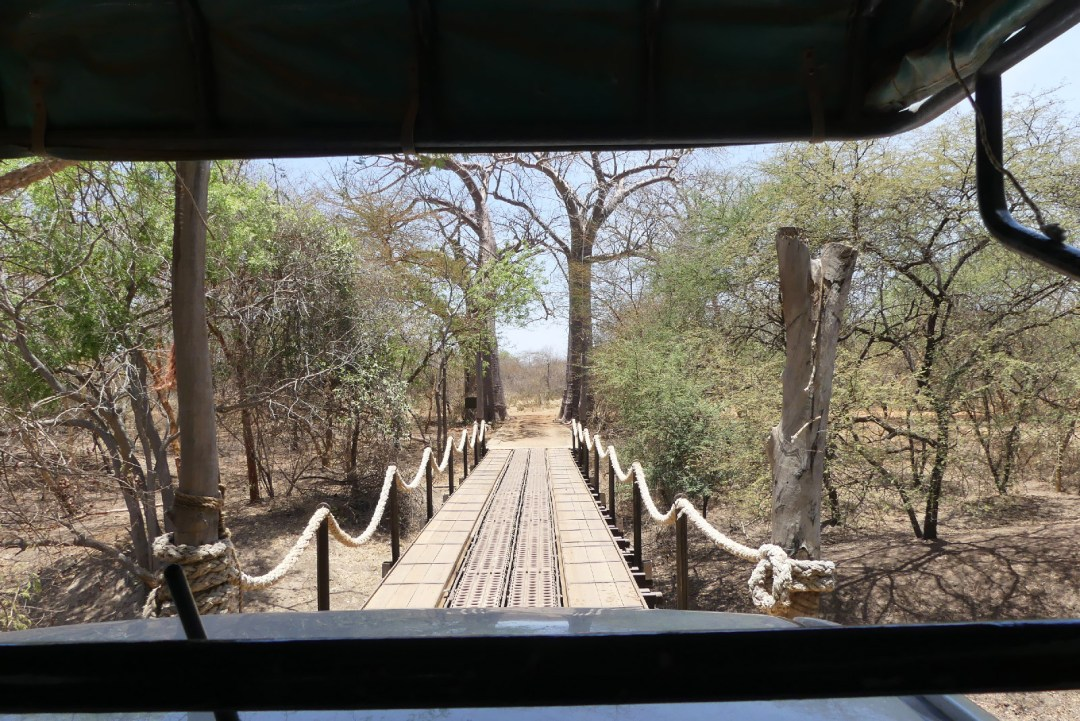 Pont de la réserve de Bandia vu depuis la voiture de safari