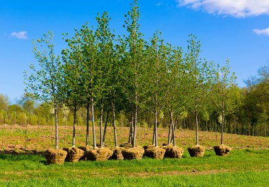 Planting Bare-root Trees, Shrubs and Roses in the Pacific Northwest.