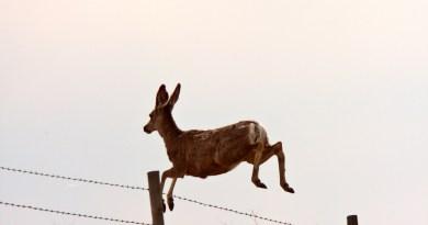 Deer Deterrents in the Pacific Northwest