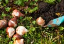 Pacific Northwest Planting Tips for November