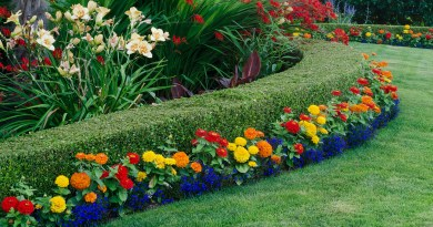 How to Use Color Effectively in Your Garden