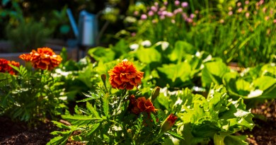 Four Budget Landscaping Ideas