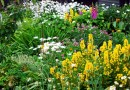 Best Perennials for Pacific Northwest Gardens