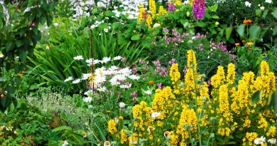 perennial garden pacific northwest levy's lawns and landscape