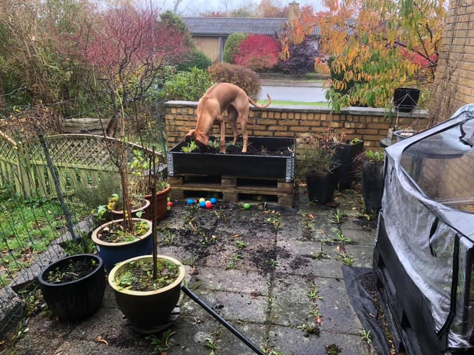 Musa mener at efteråret er tid til omplantning