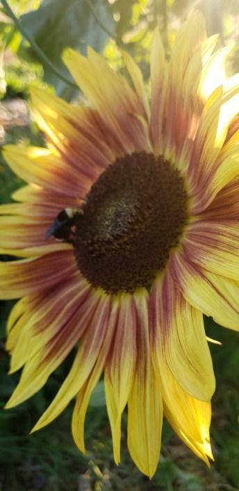 Winlock Community Garden Bee