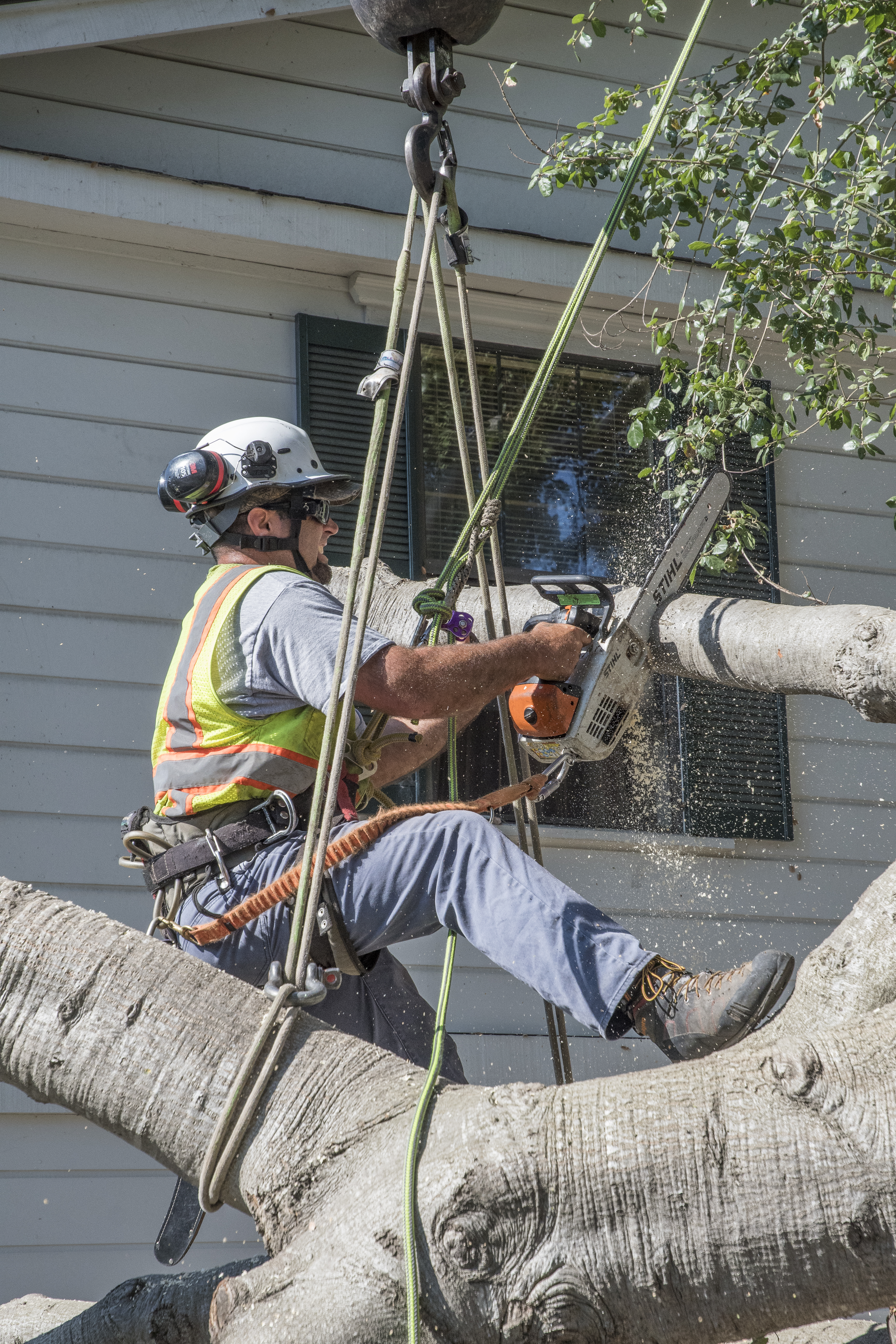 Lewis Tree Service Working