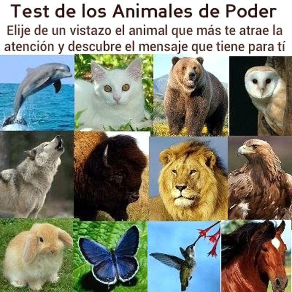 Test de Personalidad de los Animales de Poder  Ley de la