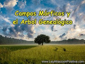 campos-morficos-y-el-arbol-genealogico