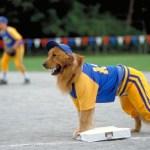 El perro deportista