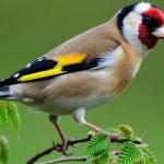El ave (poema)