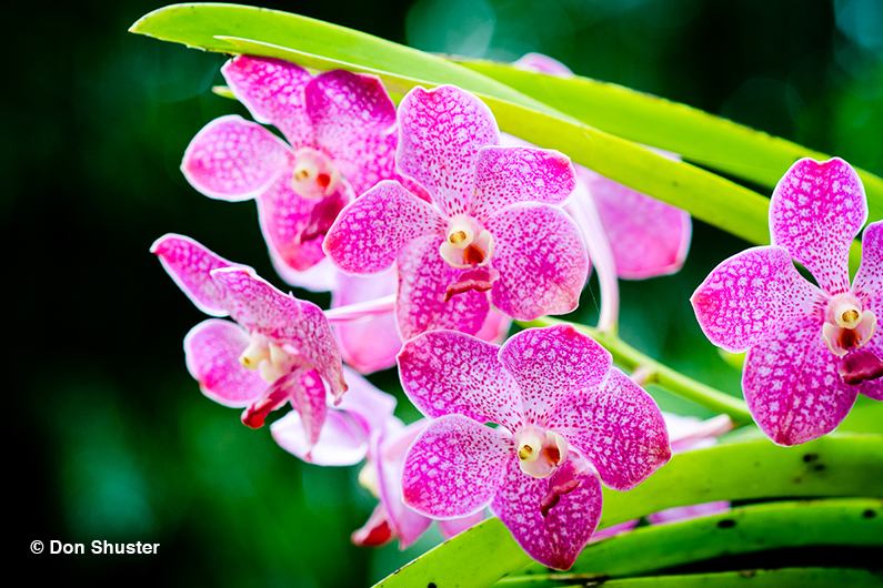 Nomi Di Fiori.Immagini Di Fiori 35 Foto E Nomi Di Orchidee Fiorite Bellissime