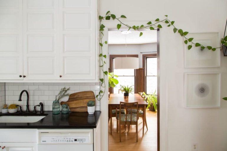 Pothos piante cura