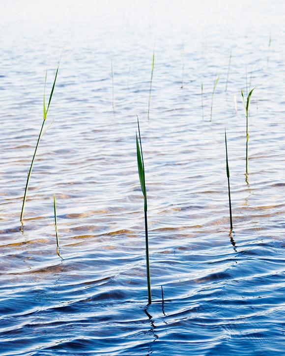 Nydalasjön - Fotograf Lars-Göran Norlin