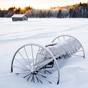 On a snowy field #2