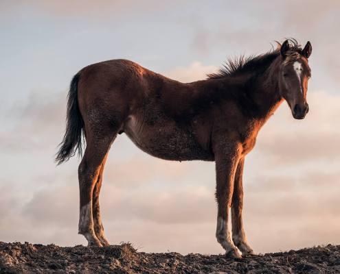 Paard in Lheebroek