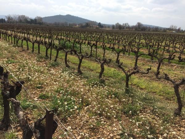 Vignobles de Provence