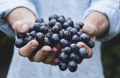 Cuvée Privée : s'offrir une cuvée d'exception en adoptant des pieds de vigne