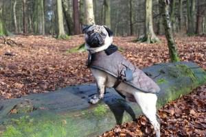 pug clothes UK