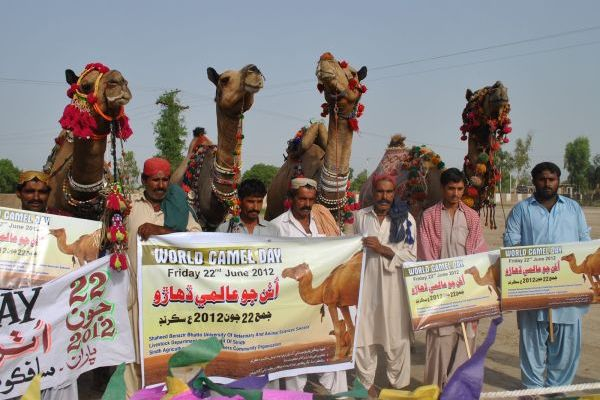 World Camel Day