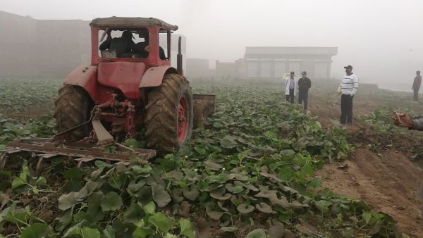 PFA crackdown against sewerage water irrigated vegetables, uproots 2480 Kanal of crops